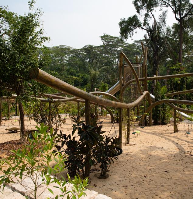tree-branch.jpg
